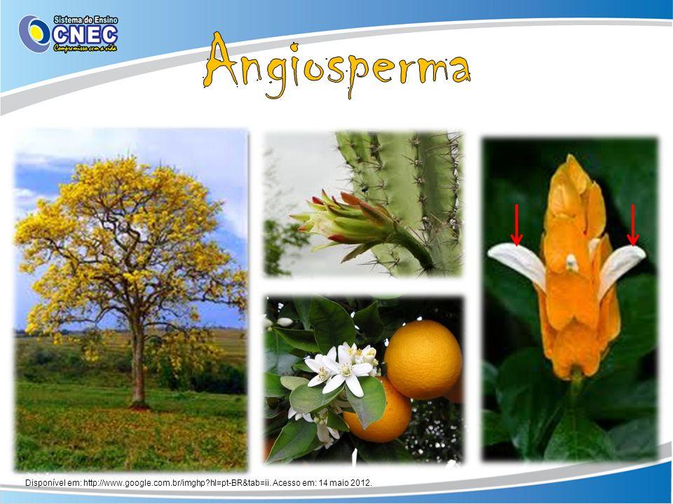 Angiosperma Disponível em: http://www.google.com.br/imghp hl=pt-BR&tab=ii. Acesso em: 14 maio 2012.