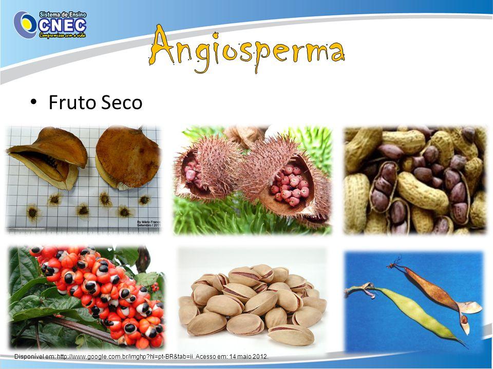 Angiosperma Fruto Seco