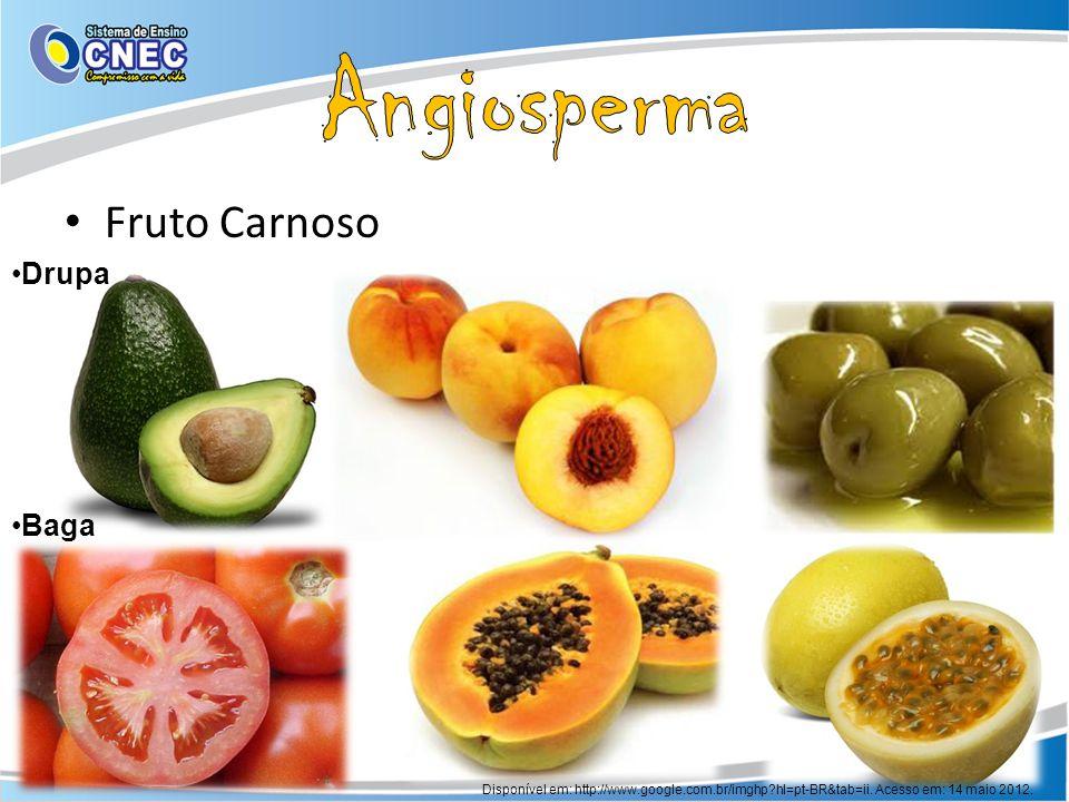 Angiosperma Fruto Carnoso Drupa Baga