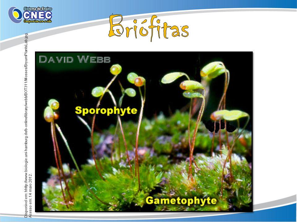 Briófitas Disponível em: hhttp://www.biologie.uni-hamburg.de/b-online/library/webb/BOT311/Mosses/BryumPlantsLab.jpg.