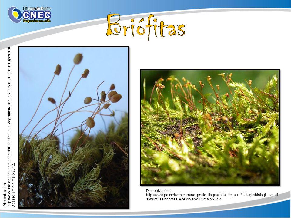 Briófitas Disponível em: http://www.biologados.com.br/botanica/taxonomia_vegetal/divisao_bryophyta_briofita_musgos.htm. Acesso em: 14 maio 2012.