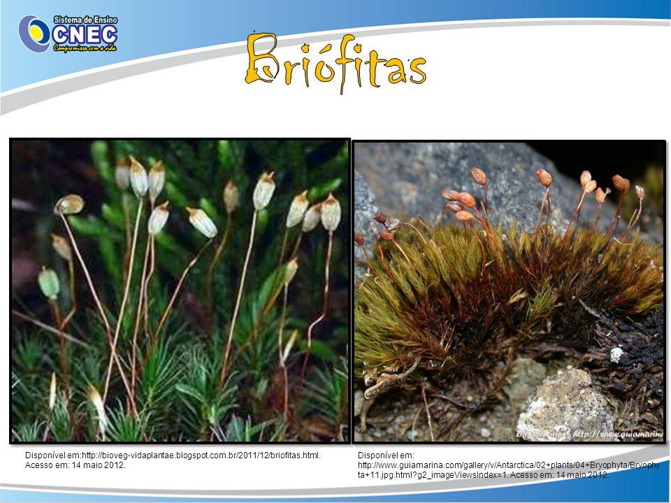 Briófitas Disponível em:http://bioveg-vidaplantae.blogspot.com.br/2011/12/briofitas.html. Acesso em: 14 maio 2012.