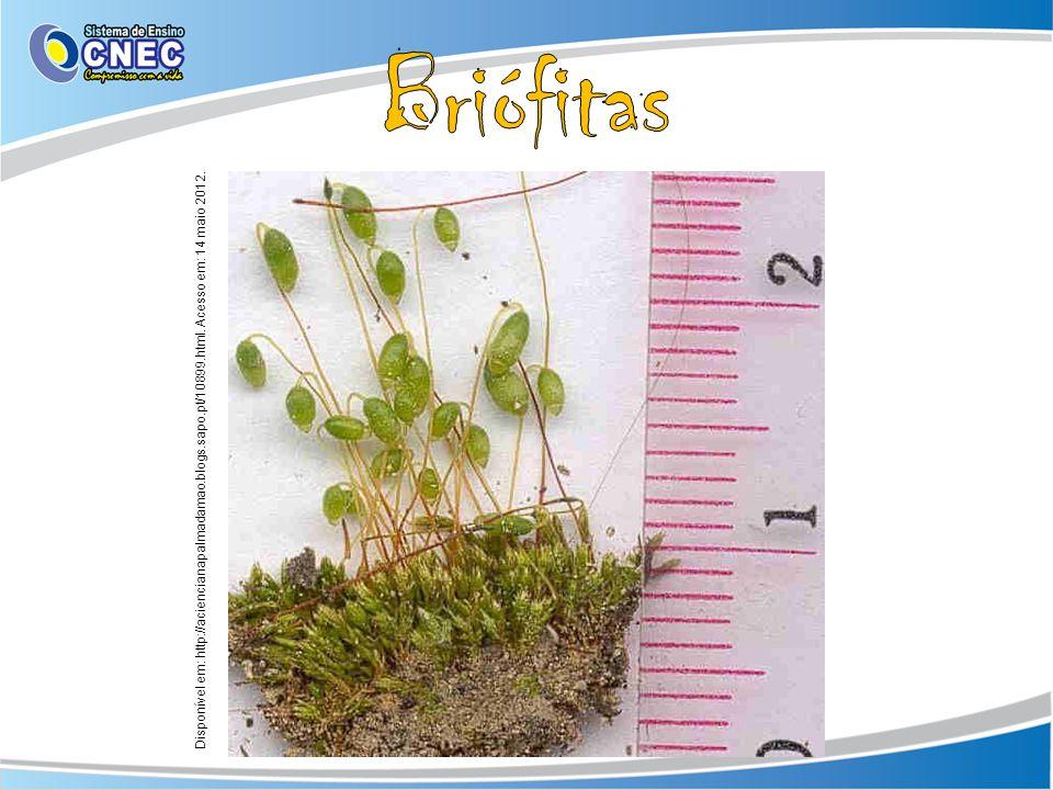 Briófitas Disponível em: http://aciencianapalmadamao.blogs.sapo.pt/10899.html.