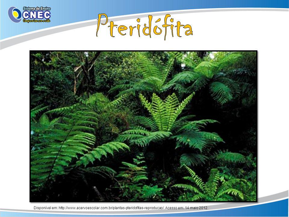 Pteridófita Disponível em: http://www.acervoescolar.com.br/plantas-pteridofitas-reproducao/.