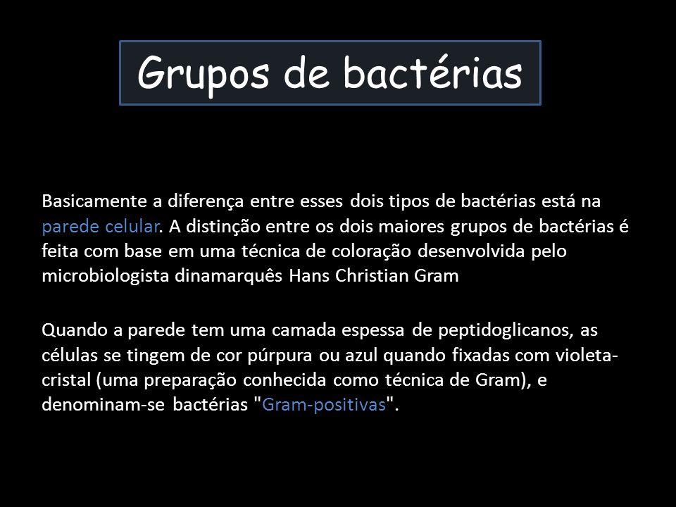 Grupos de bactérias