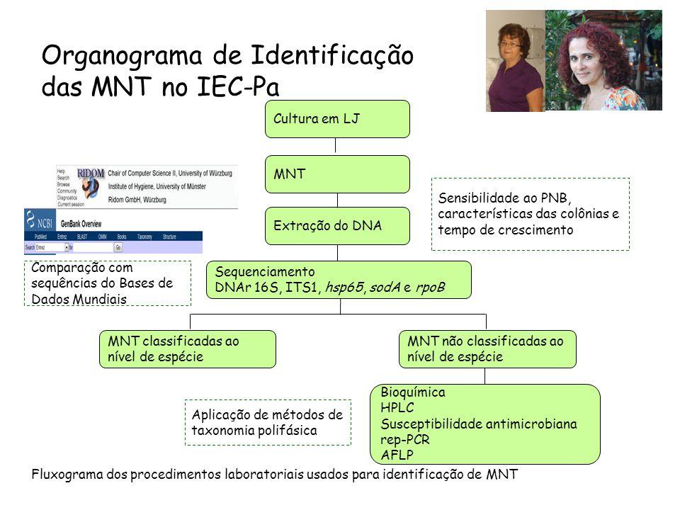 Organograma de Identificação das MNT no IEC-Pa