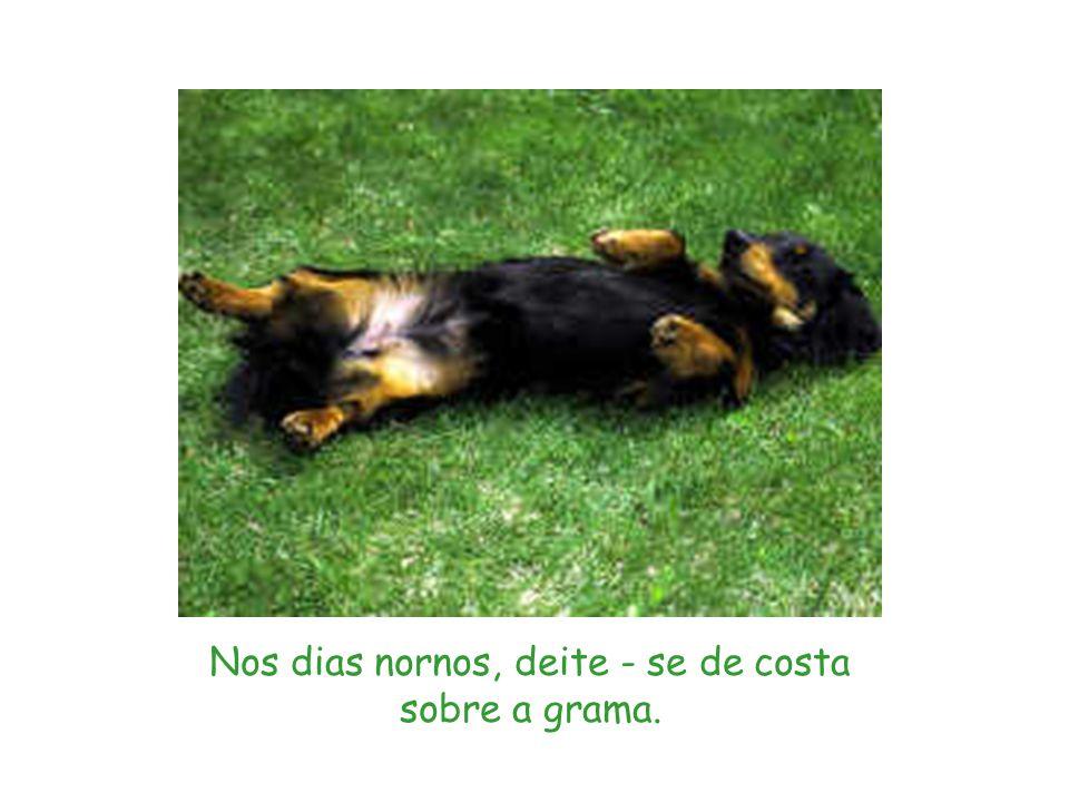 Nos dias nornos, deite - se de costa sobre a grama.