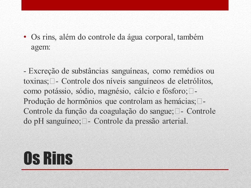 Os Rins Os rins, além do controle da água corporal, também agem:
