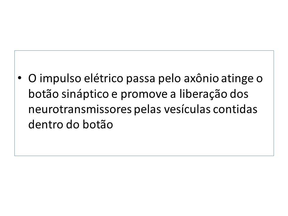 O impulso elétrico passa pelo axônio atinge o botão sináptico e promove a liberação dos neurotransmissores pelas vesículas contidas dentro do botão