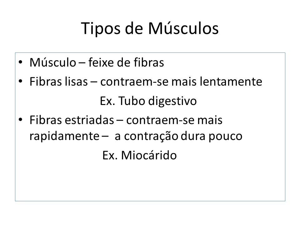 Tipos de Músculos Músculo – feixe de fibras