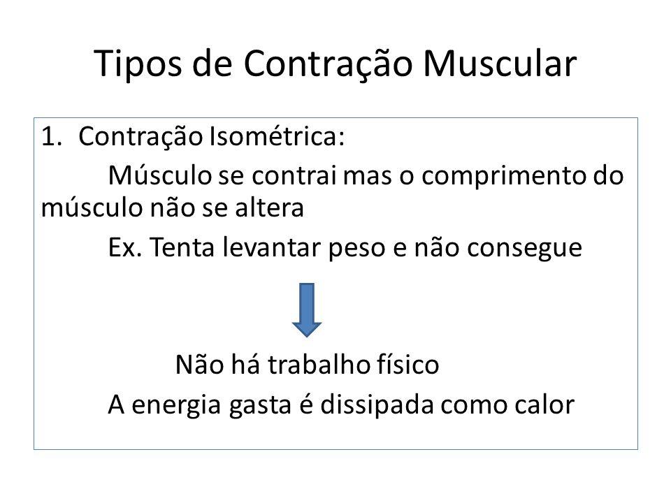 Tipos de Contração Muscular