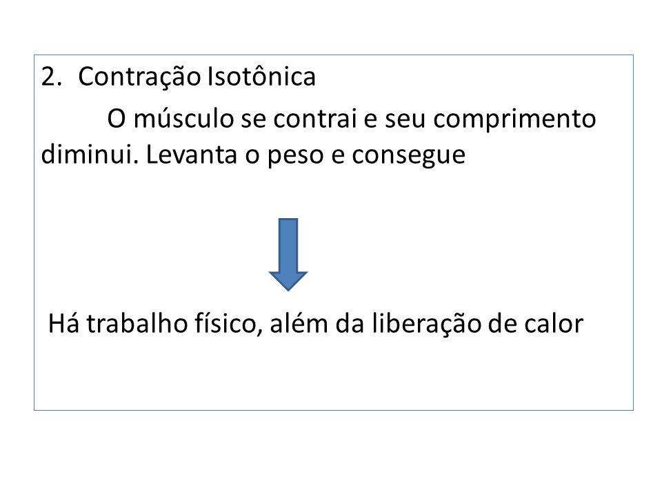Contração Isotônica O músculo se contrai e seu comprimento diminui.