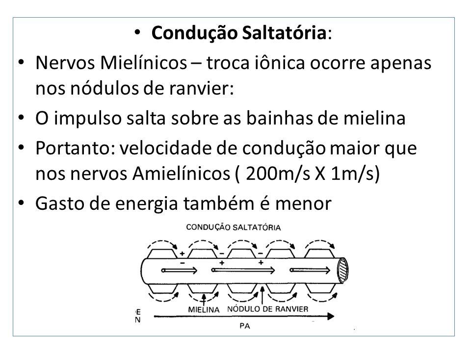 Condução Saltatória: Nervos Mielínicos – troca iônica ocorre apenas nos nódulos de ranvier: O impulso salta sobre as bainhas de mielina.