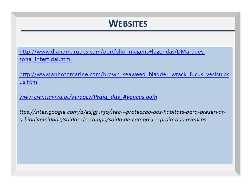 Outubro 2009 Websites. http://www.dianamarques.com/portfolio-imagens+legendas/DMarques-zona_intertidal.html.