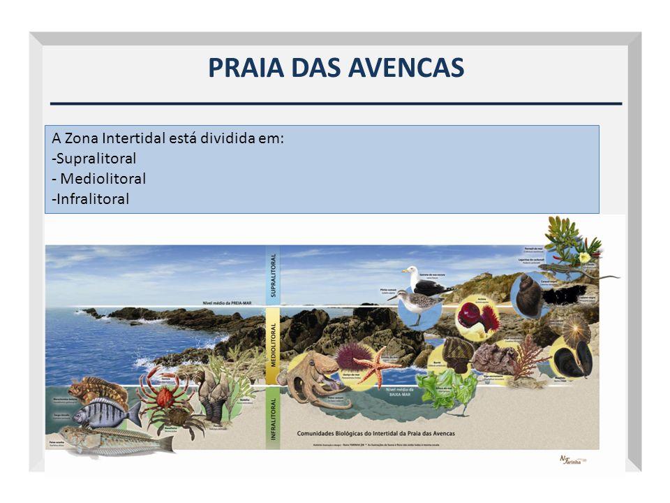 PRAIA DAS AVENCAS A Zona Intertidal está dividida em: Supralitoral