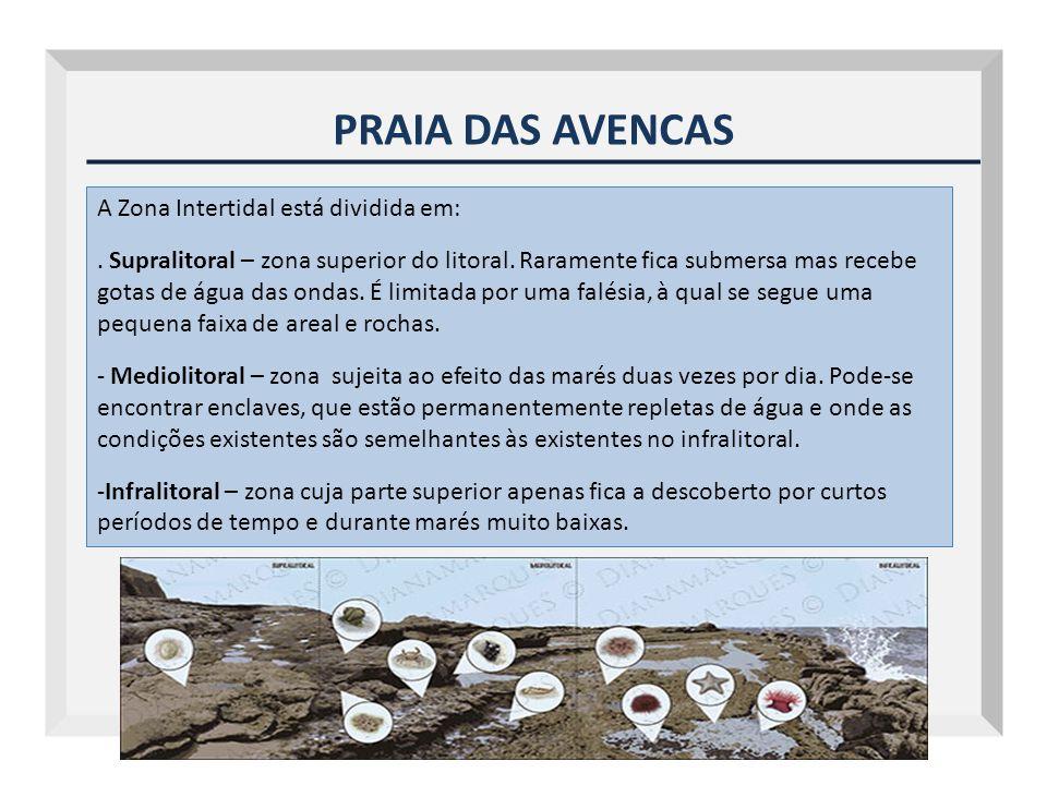 PRAIA DAS AVENCAS A Zona Intertidal está dividida em: