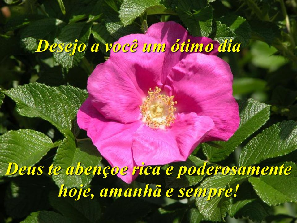 Desejo a você um ótimo dia