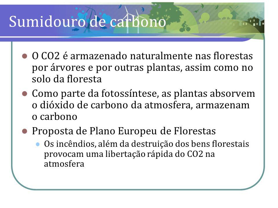 Sumidouro de carbonoO CO2 é armazenado naturalmente nas florestas por árvores e por outras plantas, assim como no solo da floresta.