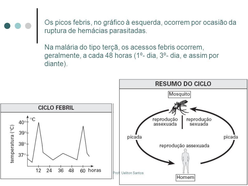 Os picos febris, no gráfico à esquerda, ocorrem por ocasião da ruptura de hemácias parasitadas.