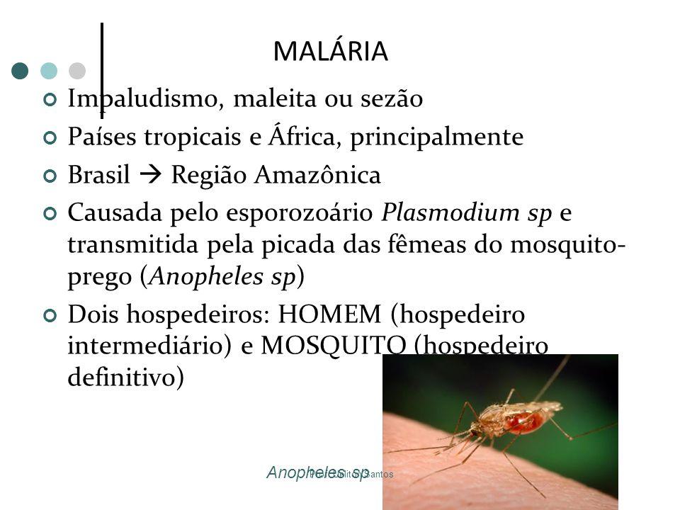 MALÁRIA Impaludismo, maleita ou sezão