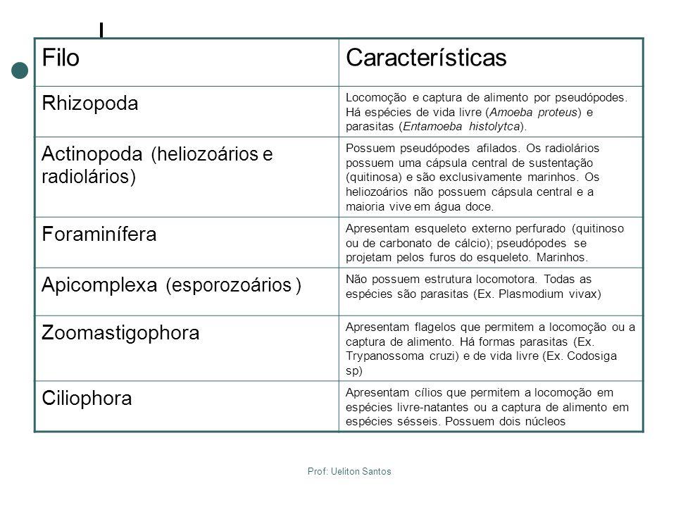 Filo Características Rhizopoda Actinopoda (heliozoários e radiolários)
