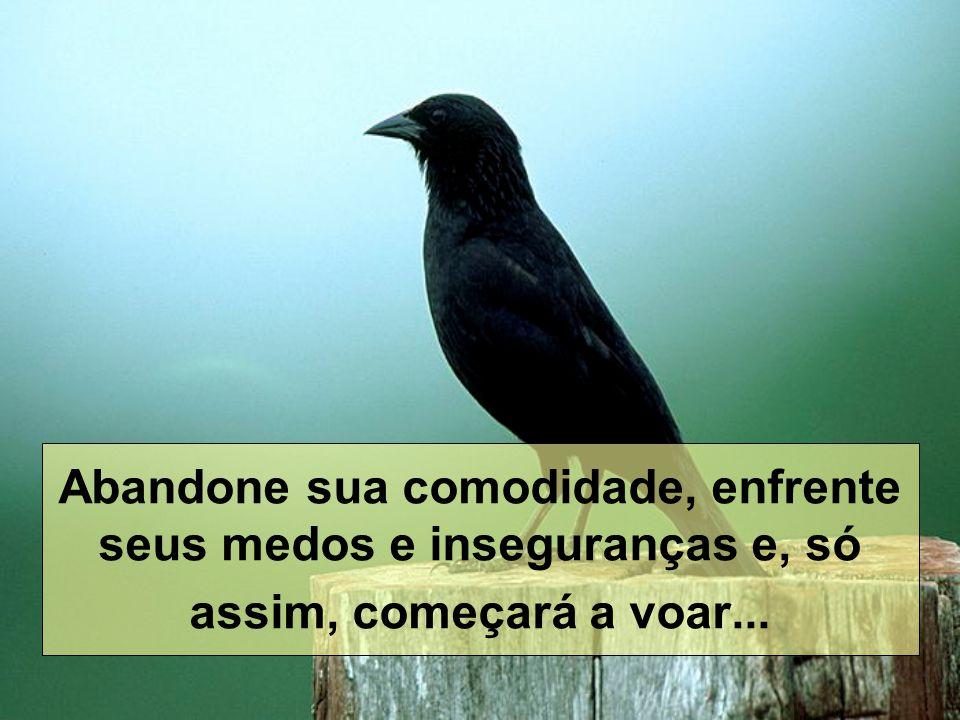 Abandone sua comodidade, enfrente seus medos e inseguranças e, só assim, começará a voar...