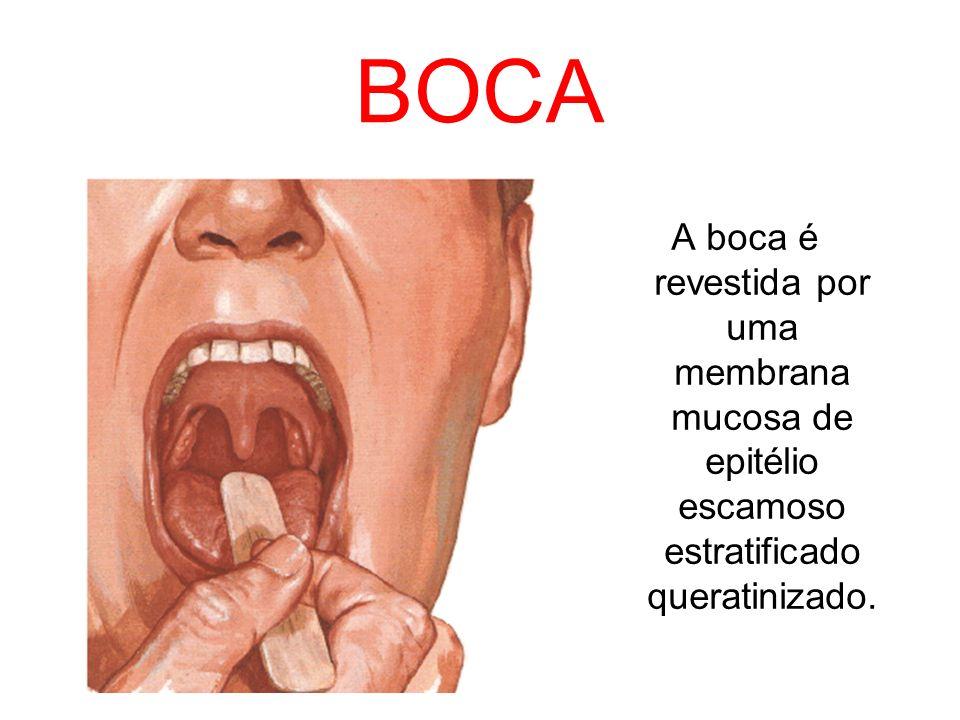 BOCA A boca é revestida por uma membrana mucosa de epitélio escamoso estratificado queratinizado.