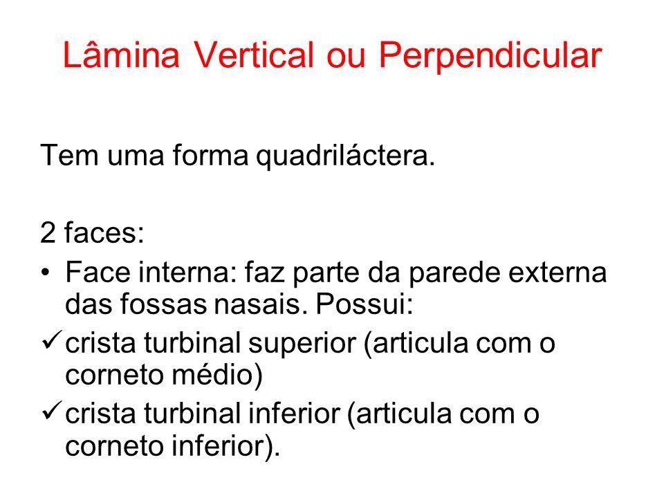 Lâmina Vertical ou Perpendicular