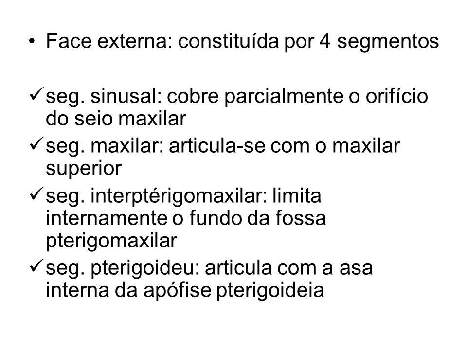 Face externa: constituída por 4 segmentos