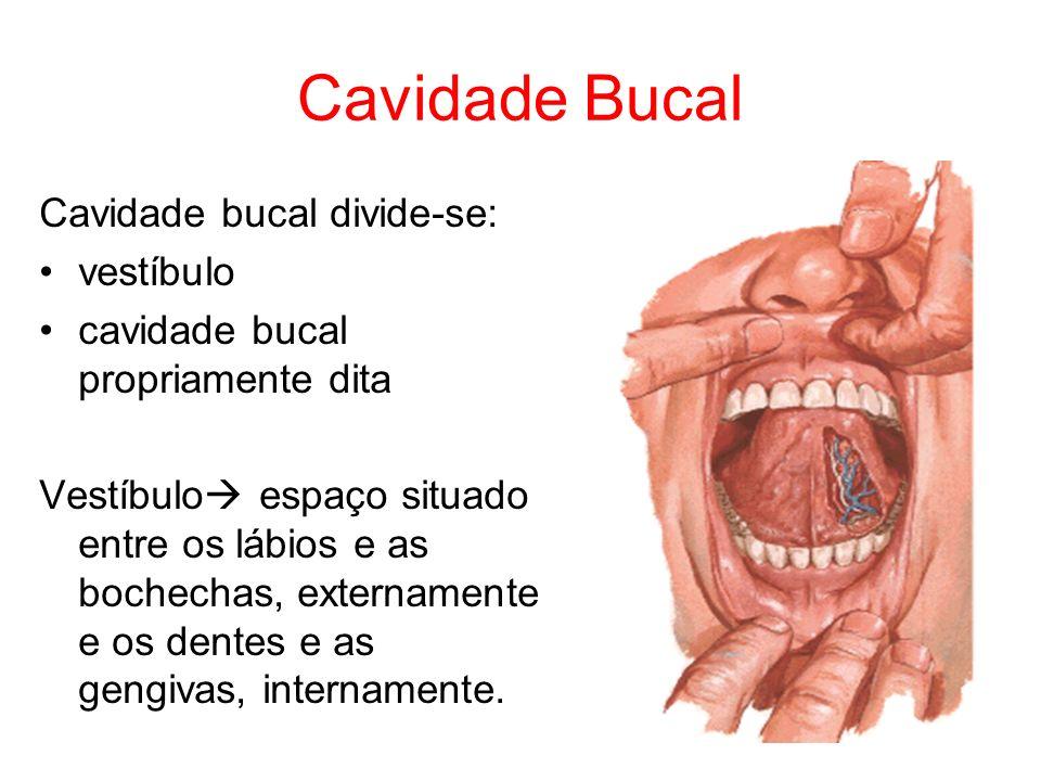 Cavidade Bucal Cavidade bucal divide-se: vestíbulo
