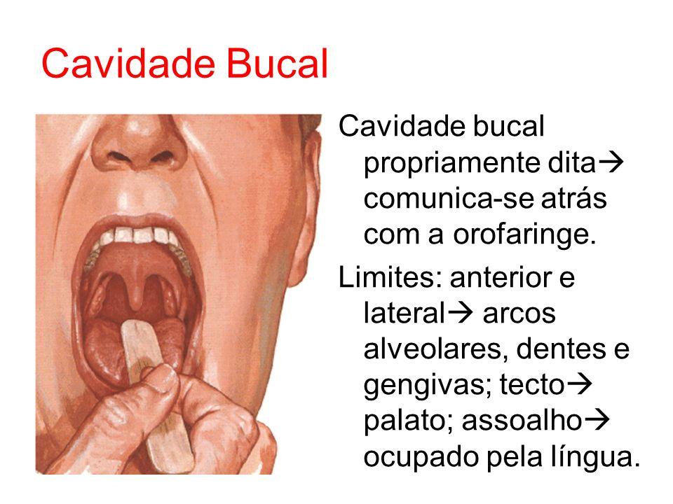 Cavidade Bucal Cavidade bucal propriamente dita comunica-se atrás com a orofaringe.