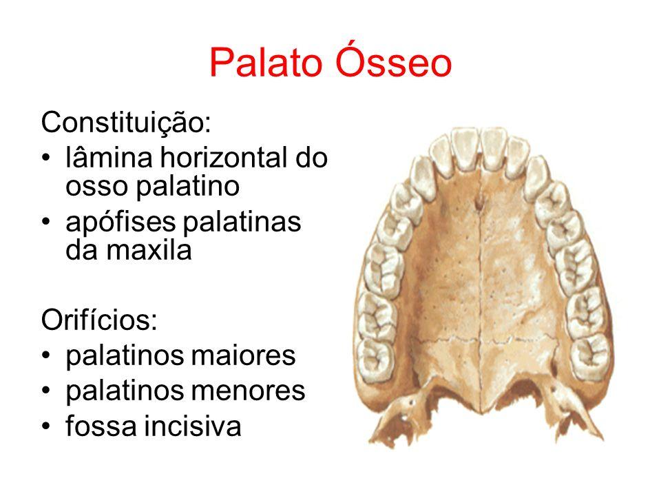 Palato Ósseo Constituição: lâmina horizontal do osso palatino