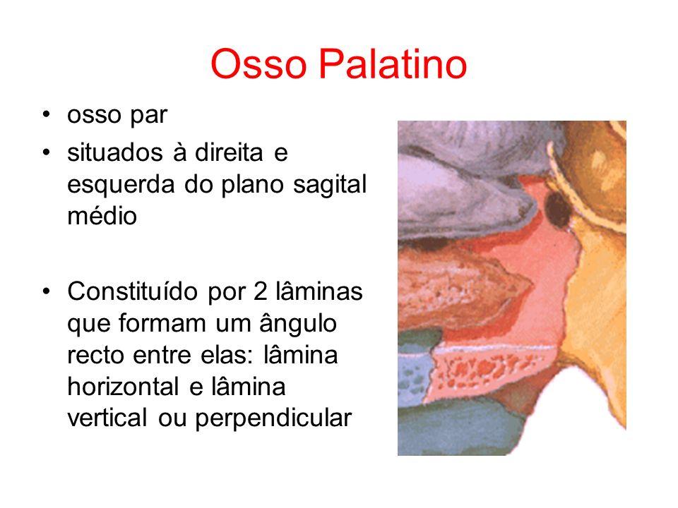 Osso Palatino osso par. situados à direita e esquerda do plano sagital médio.