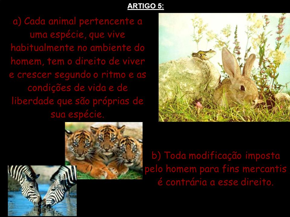 ARTIGO 5: