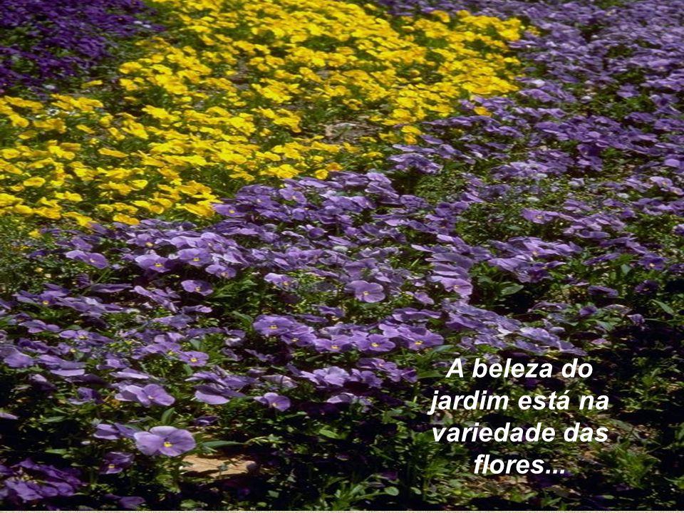 A beleza do jardim está na variedade das flores...