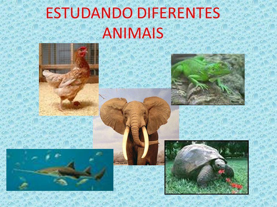 ESTUDANDO DIFERENTES ANIMAIS