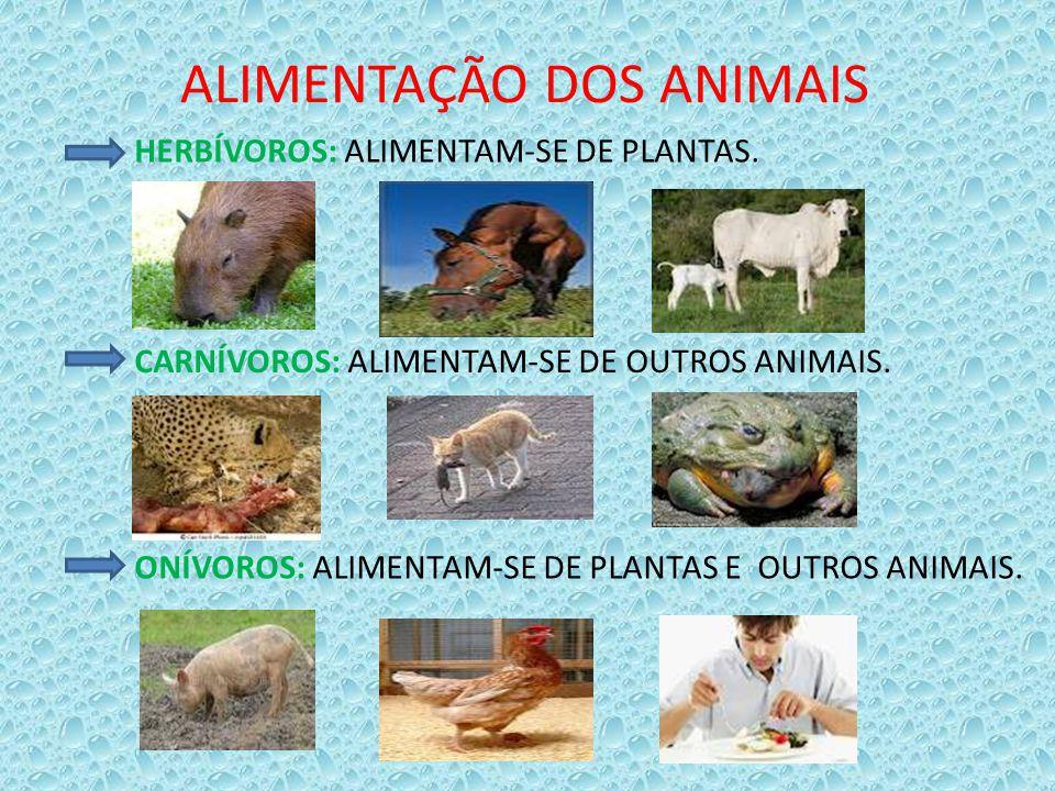 ALIMENTAÇÃO DOS ANIMAIS