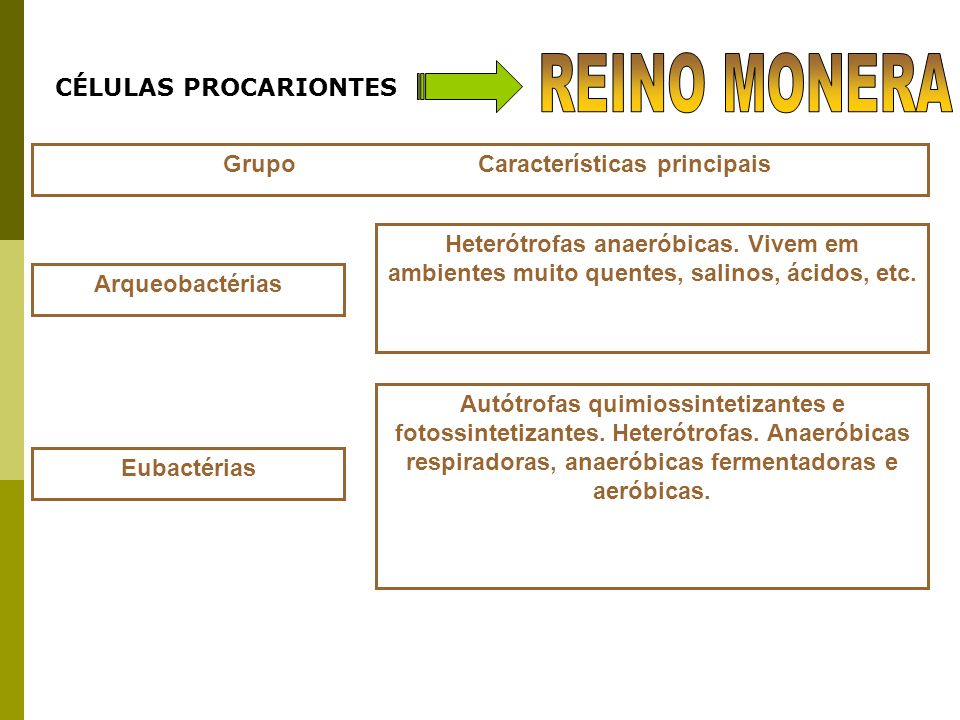 Grupo Características principais