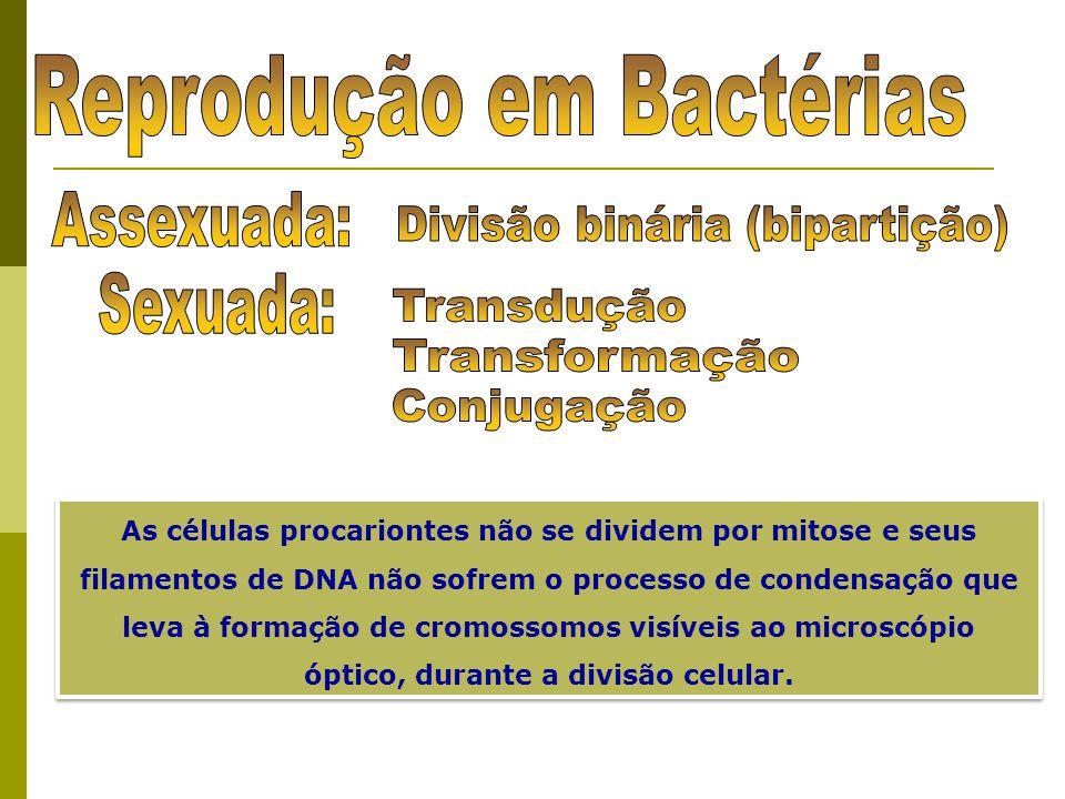Reprodução em Bactérias Divisão binária (bipartição)