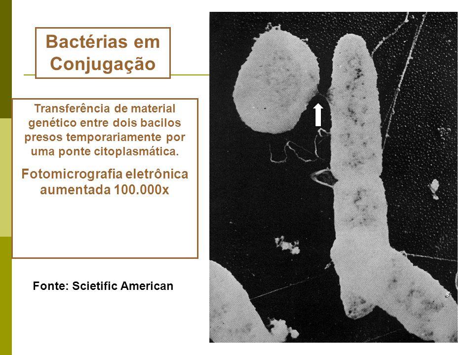 Bactérias em Conjugação Fotomicrografia eletrônica aumentada 100.000x