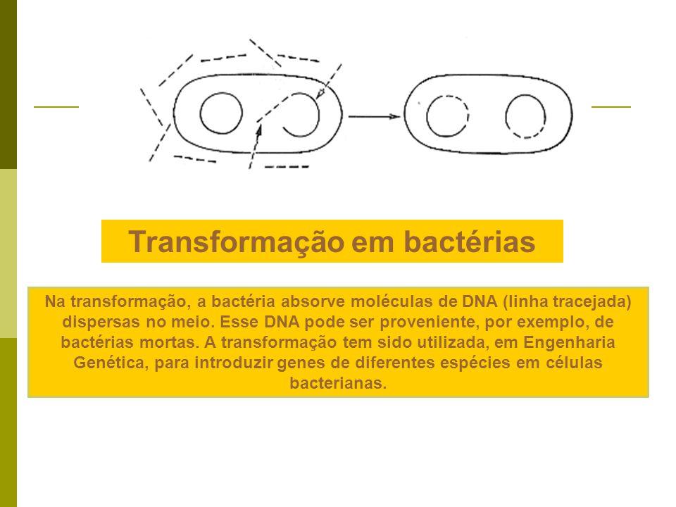 Transformação em bactérias