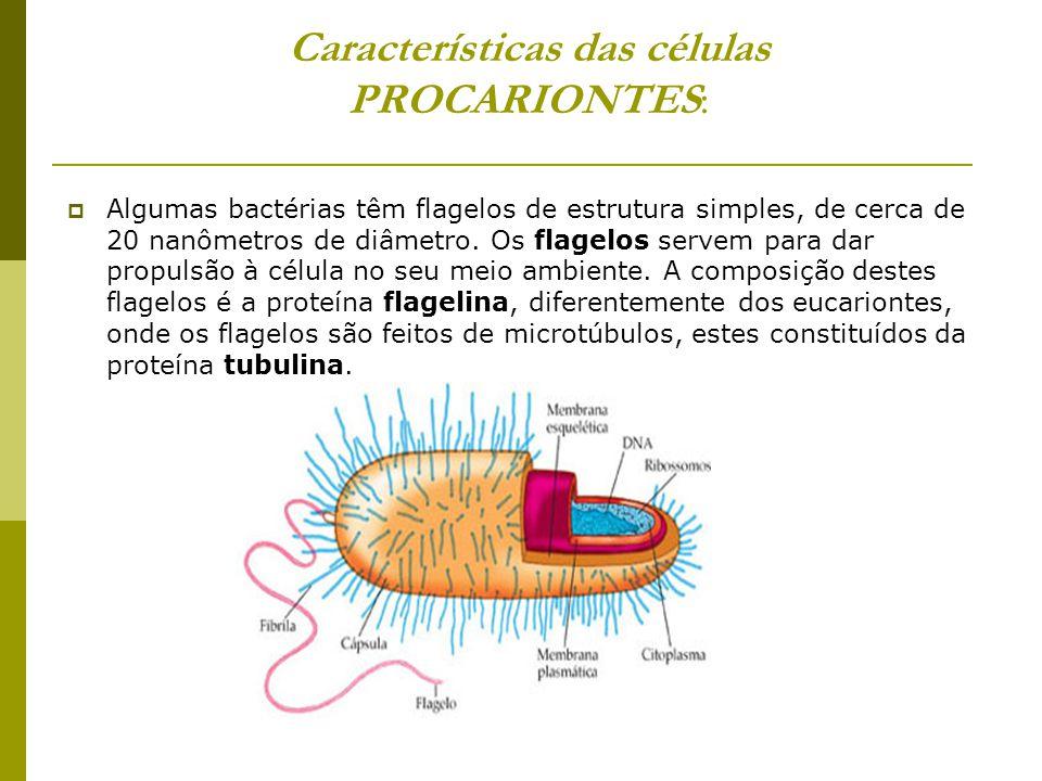 Características das células PROCARIONTES:
