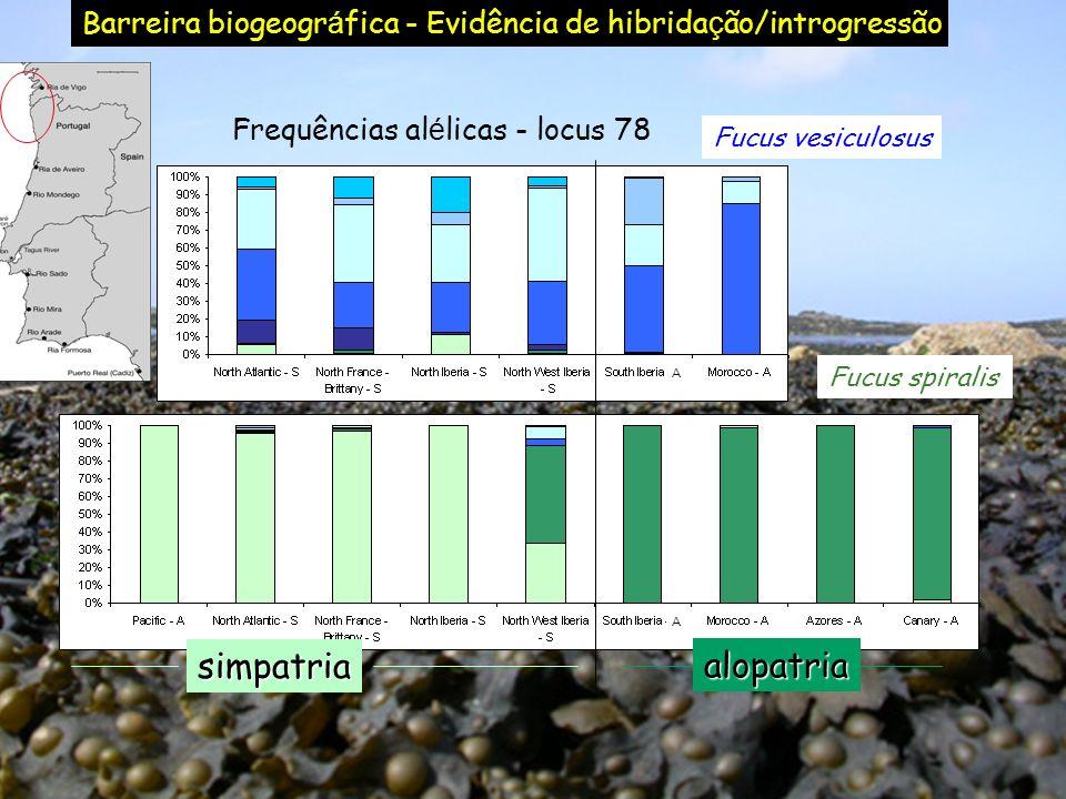 Frequências alélicas - locus 78