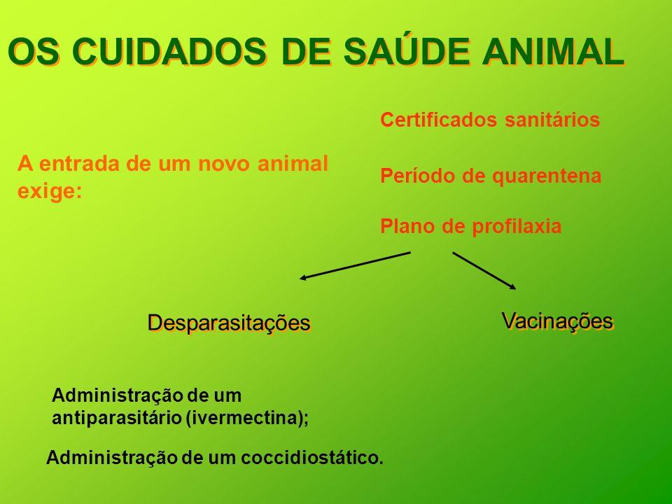 OS CUIDADOS DE SAÚDE ANIMAL