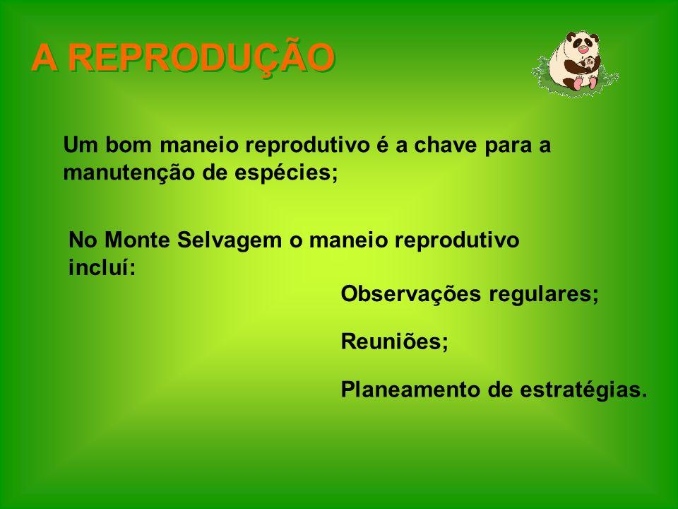 A REPRODUÇÃO Um bom maneio reprodutivo é a chave para a manutenção de espécies; No Monte Selvagem o maneio reprodutivo incluí:
