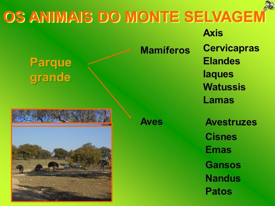 OS ANIMAIS DO MONTE SELVAGEM