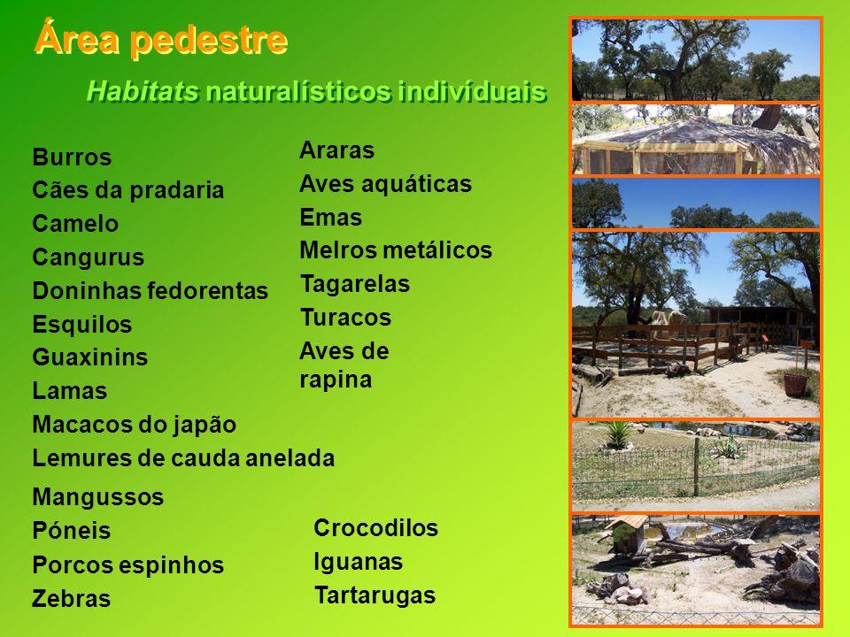 Área pedestre Habitats naturalísticos indivíduais Araras Burros