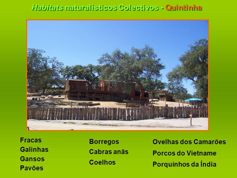 Habitats naturalísticos Colectivos - Quintinha