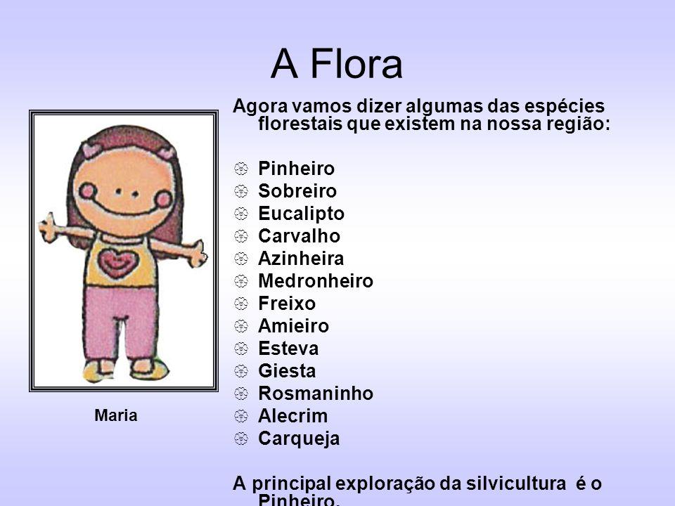 A Flora Agora vamos dizer algumas das espécies florestais que existem na nossa região: Pinheiro. Sobreiro.