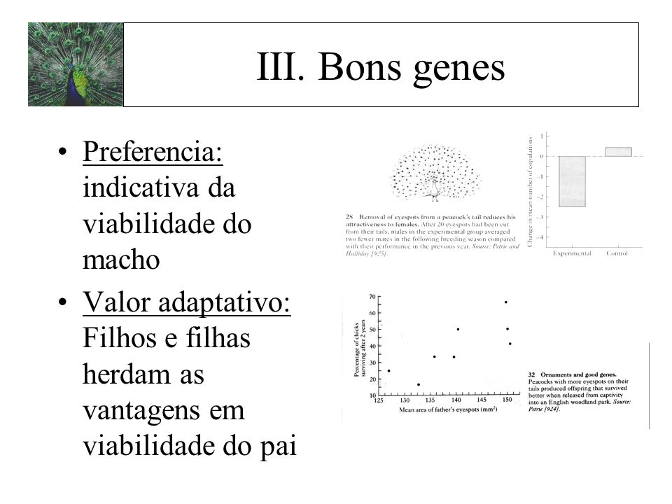 III. Bons genes Preferencia: indicativa da viabilidade do macho